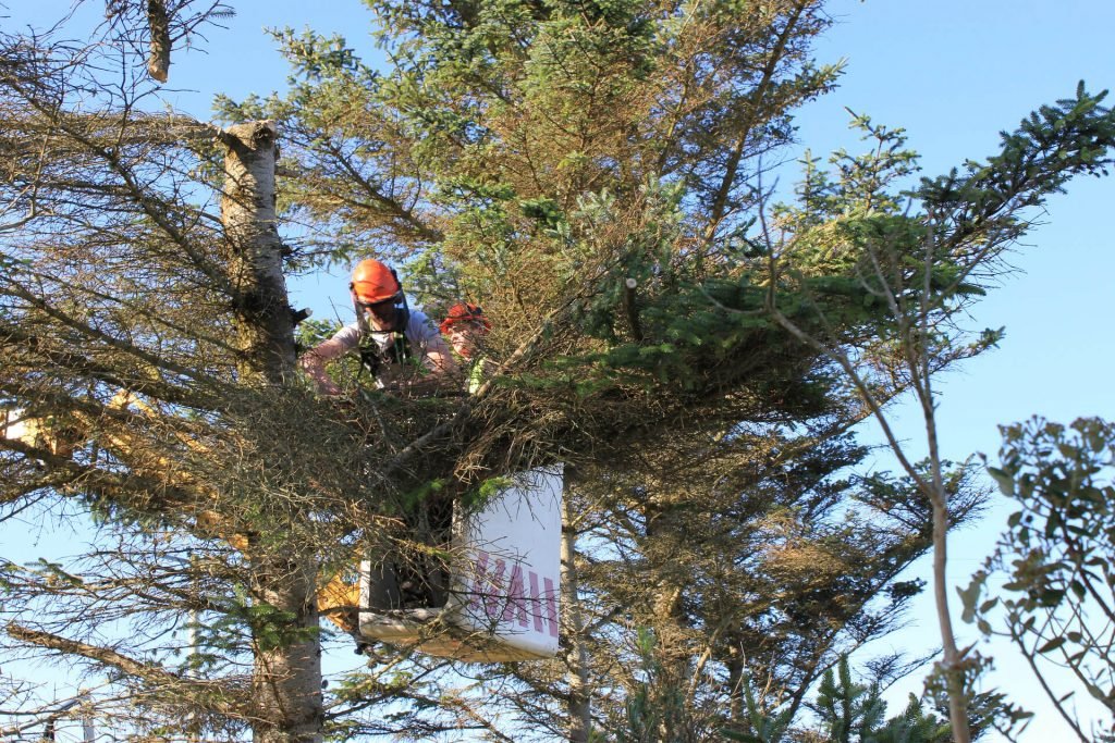 summer tree removal safety, summer tree removal security, summer tree cutting, summer tree cutting safety, summer tree curring security, security specialists tree cutting tips